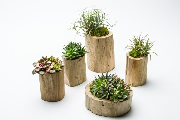 kokedema, succulents, airplants - kpcollaboration | ello
