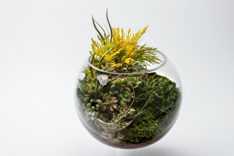 kokedema, succulents, airplants - kpcollaboration   ello