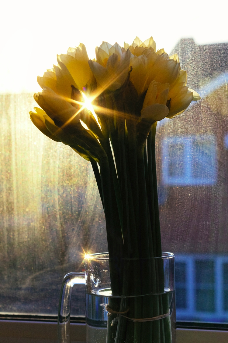 daffodilds | flickr - photography - alinatrifan | ello