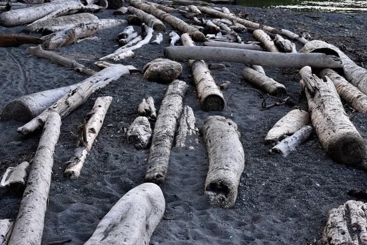 BC, Victoria, beach, driftwood - edwardli   ello