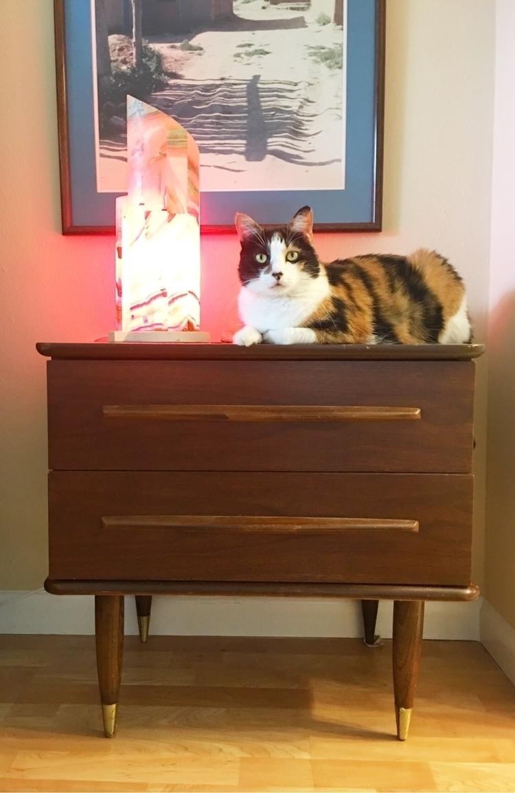 MoMo :heart_eyes_cat:#vintage - midcenturymodern - ellothrift | ello