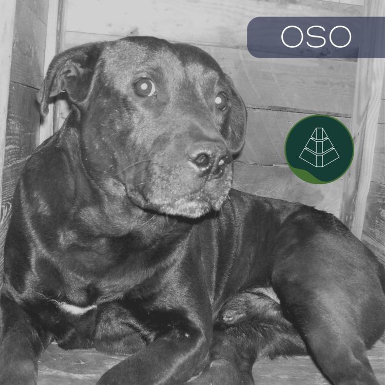 passed 3 years OSO - ncrbasstard | ello