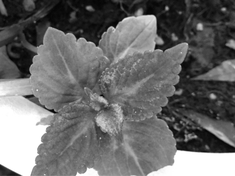 Garden Plant Growing Transplant - mikefl99 | ello
