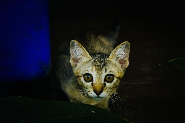 wide-eyed (2017 - animal, asia, cat - edwardpalmquist   ello