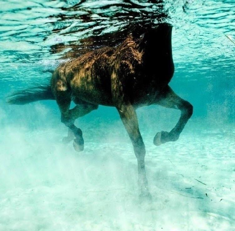 wild Kurt Arrigo - horses, aquatic - bitfactory | ello