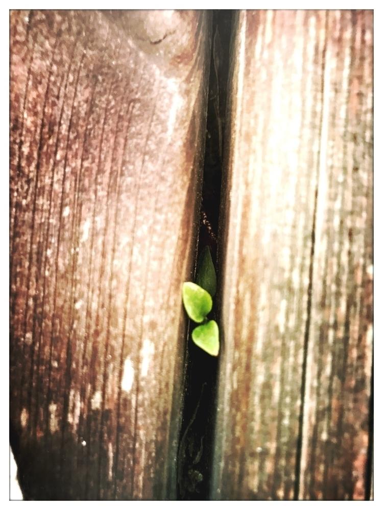 place grow - brown, green, plant - yogiwod | ello