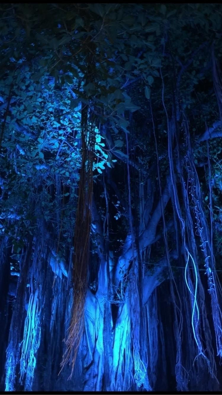 Hale Koa Night - iphonephotography - spiketwopointo   ello