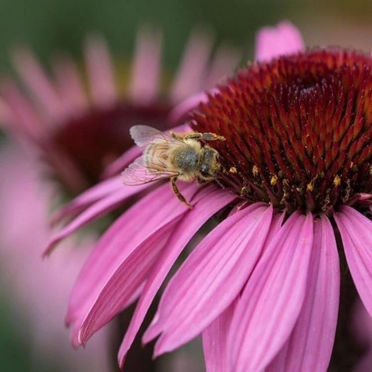 Por nuestras adorables abejas,  - apotecarix | ello