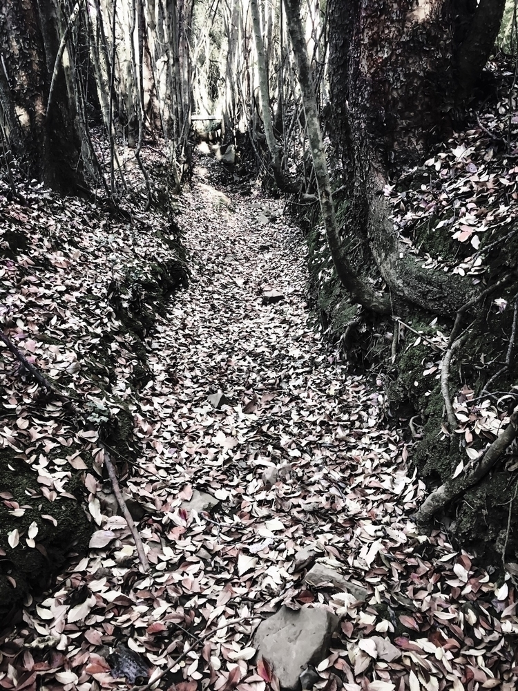 Forest floor. Mass leaves dried - lecuona | ello