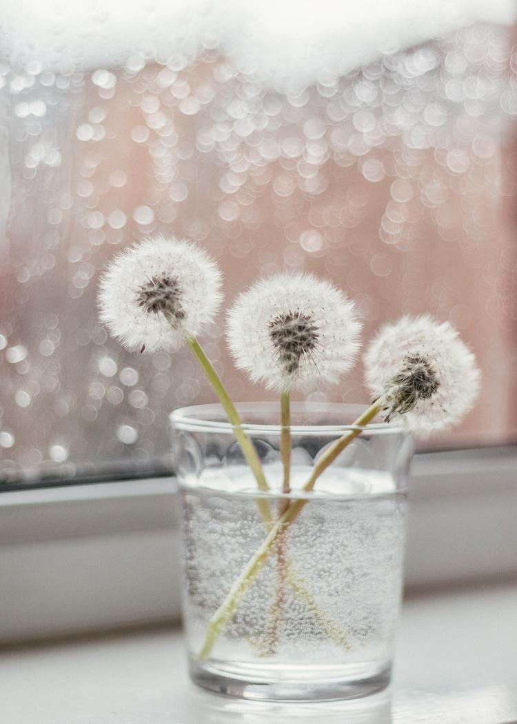 dandelions rainy day | blog - photography - alinatrifan | ello