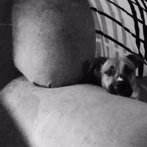 master puppies - thaiiisr | ello