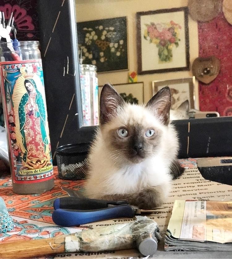Baby boy Siamese Dream - Siamesecat - asotojewelry | ello