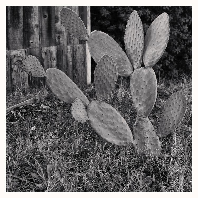 Cactus, Sacramento, CA - guillermoalvarez   ello