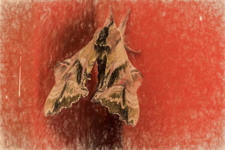 Boo Milo Moth fond door jams. h - davidseibold | ello
