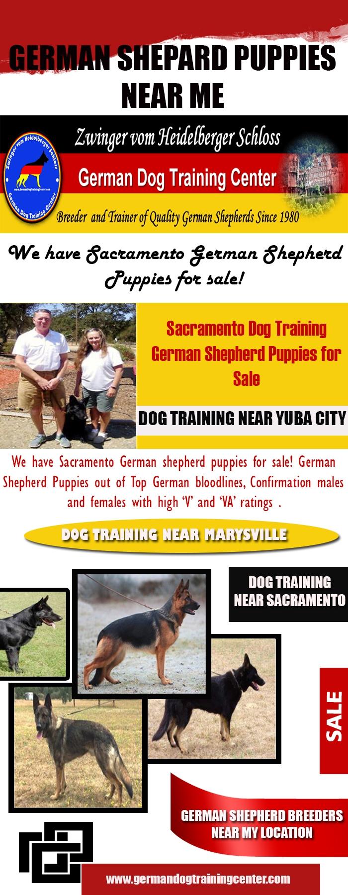 German Shepard Puppies Website - marysvilledogtraining | ello