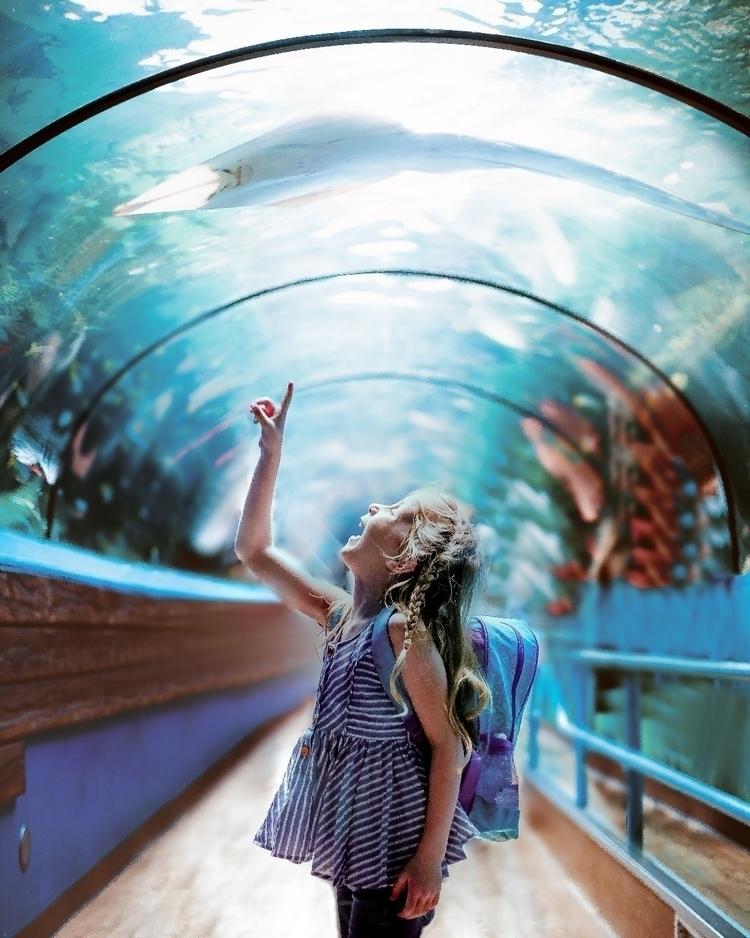 Aquarium adventures - aquarium, ray - handsfullheartfuller | ello
