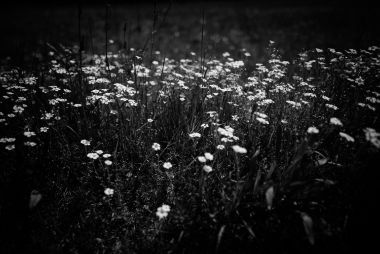Flowers, Linow - flowers, blossom - peterrunkewitz | ello