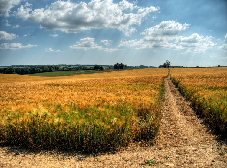 paths Continuing grain theme ,  - neilhoward | ello