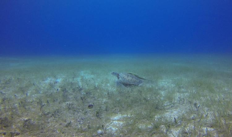 Diving coast Island Utila findi - locart | ello