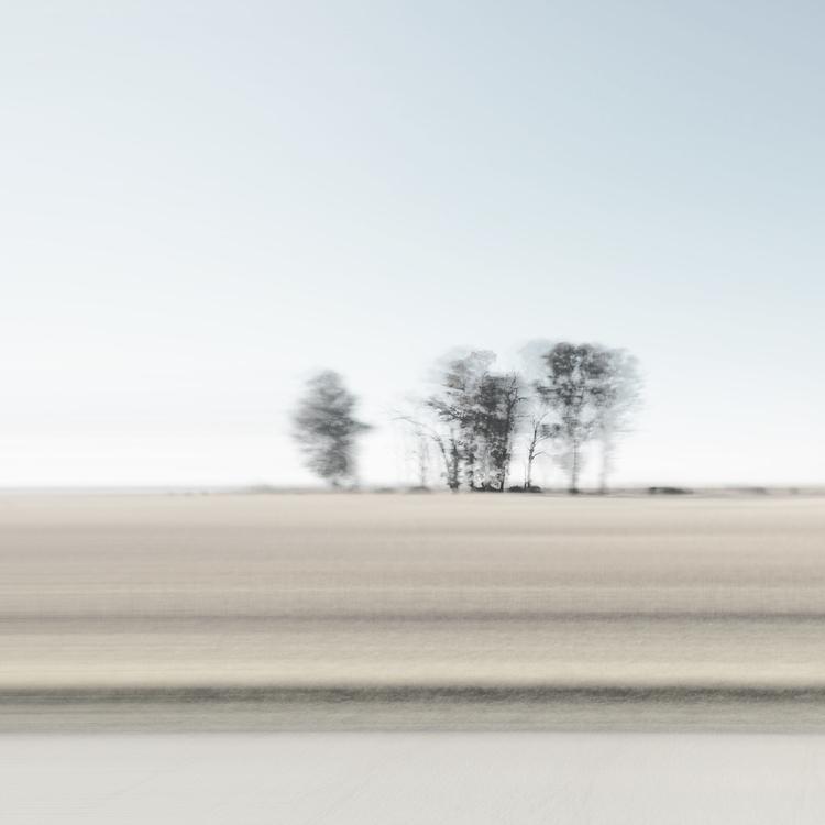 Freeway Forest - shot iPhone 5  - lioneldp | ello