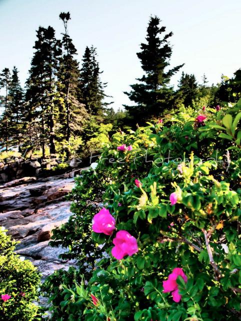"""Give odorous sunrise garden be - natureisfree | ello"