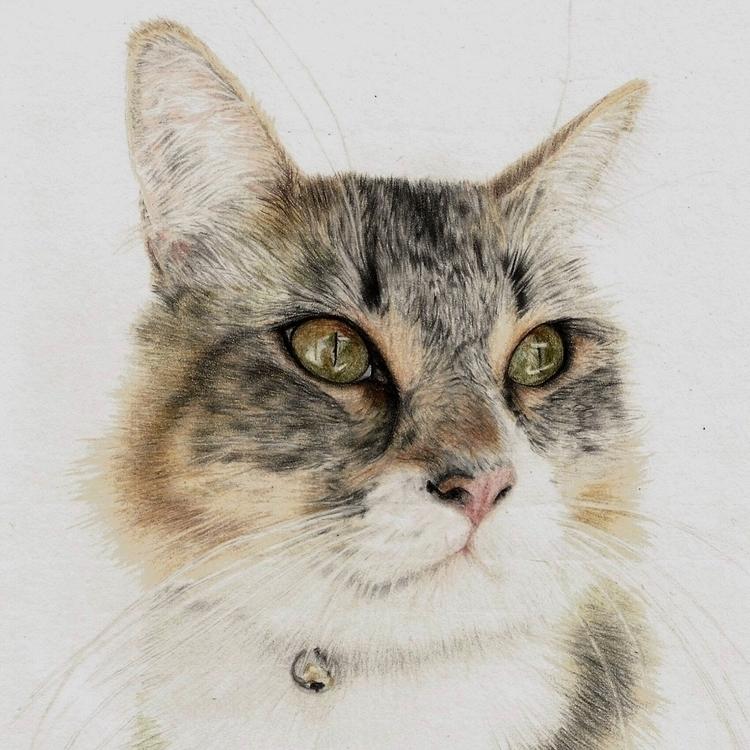 Maddie cat! Meow - kim_carter_art | ello