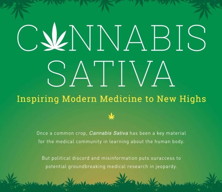 cannabis, weed, sativa, CannabisSativa - valosalo | ello