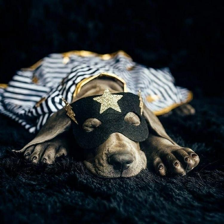 bed time - bamthegreatdane, greatdane - katietakesapicture | ello
