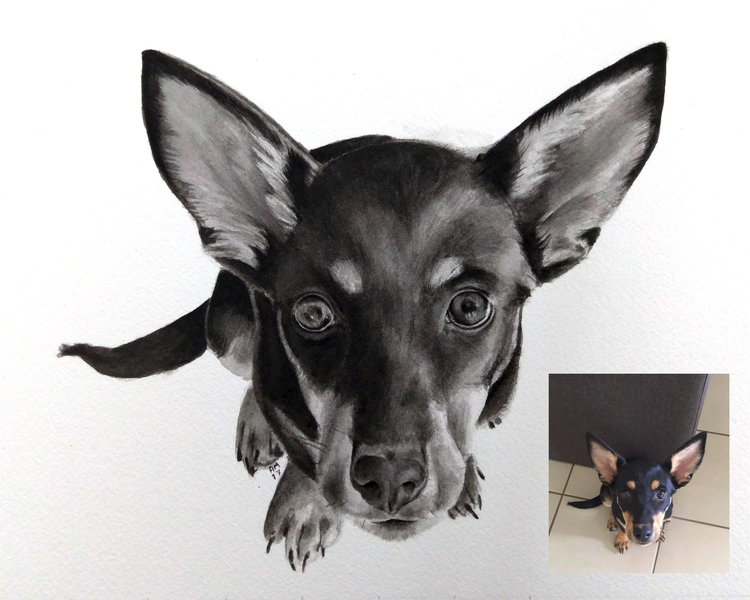 <3 Puppy Eyes beautiful, inq - ameliamargaurite | ello