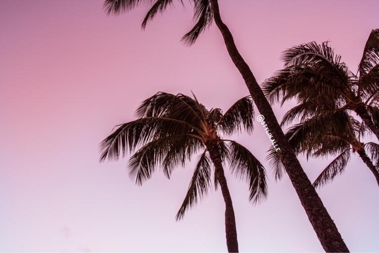palmtrees, hawaii, sunset, canon - stylinalle | ello