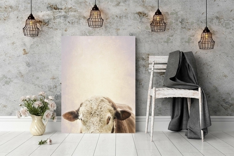 Hereford Bull - 2, interior125, darlingmovement - bythehorns | ello
