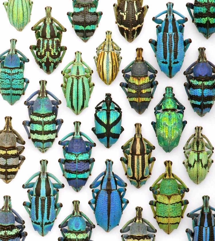 number beetle species world ast - christophermarley | ello
