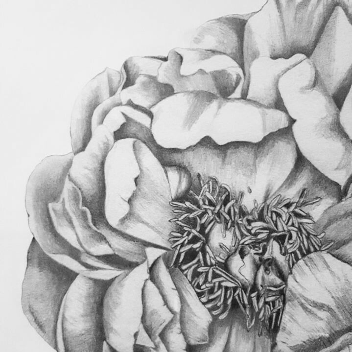 Time close latest Peony illustr - paperandstyleco | ello