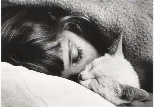 cat, sleeping, tears, black, white - sam4s | ello