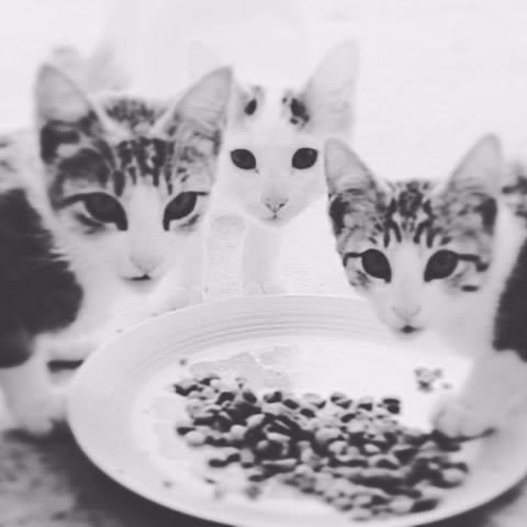 Cat life - azulaymarabi | ello
