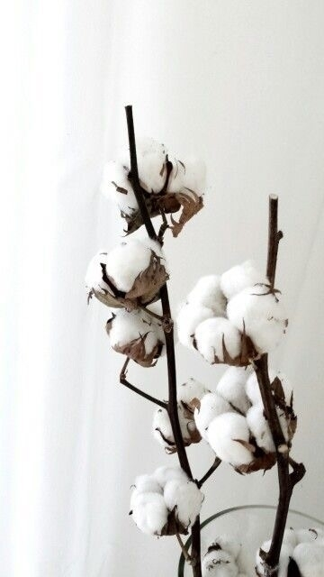 Cotton// big believer highest q - adelynscreations   ello