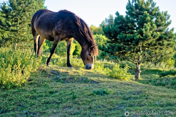 Horse Prairie - Landscape, Photography - rkebbi | ello