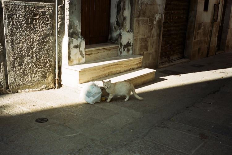 cat. start posting analog pictu - damienaa | ello