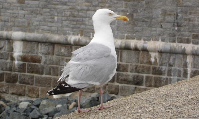 Deptford High Street seagull fi - davelevy | ello