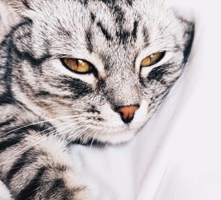 Cats lives,  - thegoodsheet | ello