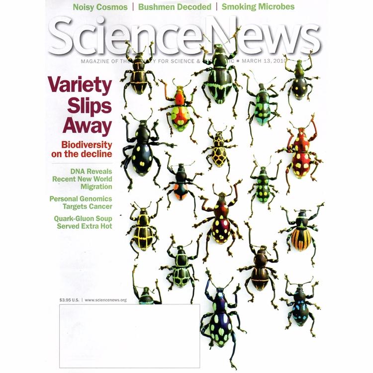 11x14 Walking Weevils. cover Sc - christophermarley | ello