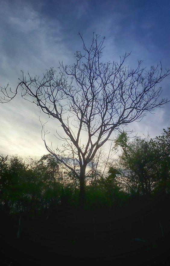 Fractal - nature, fractal, tree - lucii | ello