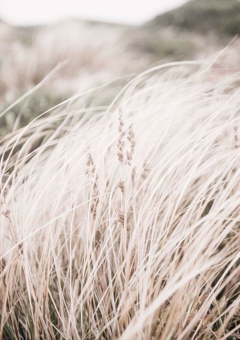 Windswept | Fine Art Photograph - elementalprints | ello