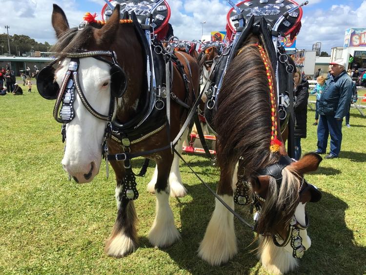 Woking horses SA - bilbycoote | ello