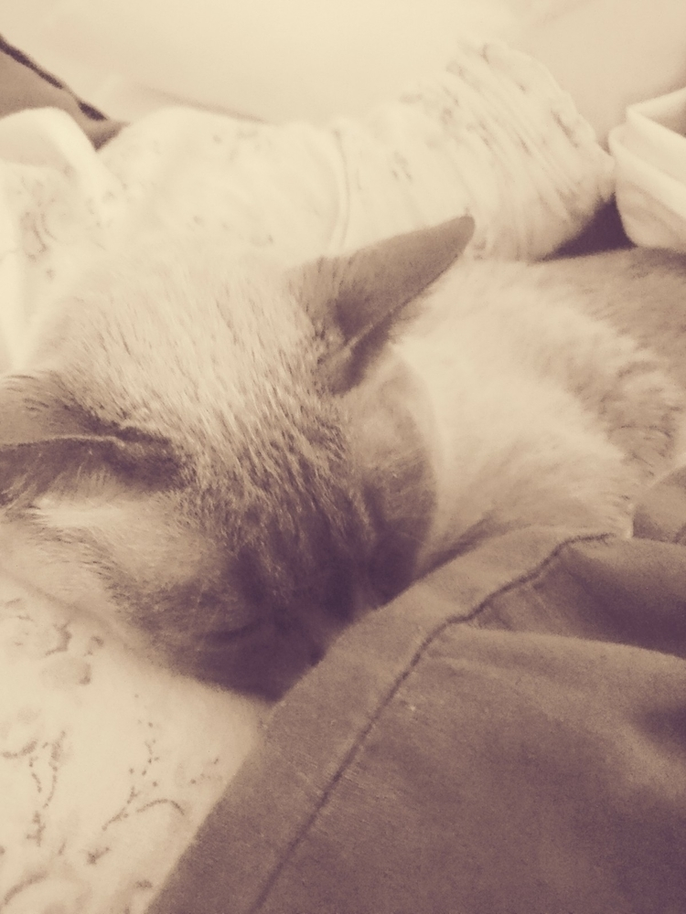 love snuggles?  - catnip, ellophotography - honestlystore | ello