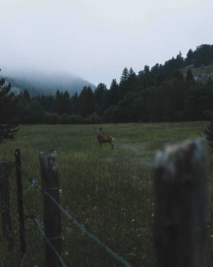 Buck - buck, deer, nature, colorado - andrewwee | ello