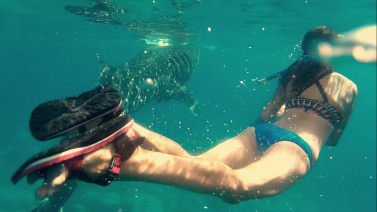 Whale Shark - ataraxiaa   ello