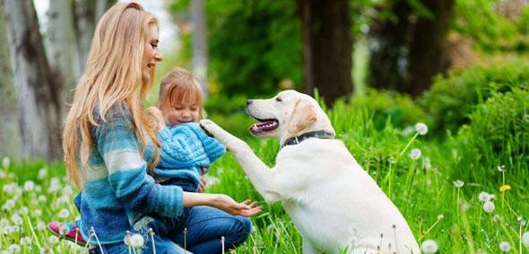 Doggy Dan Review Jessica Spradl - doggydanreview   ello