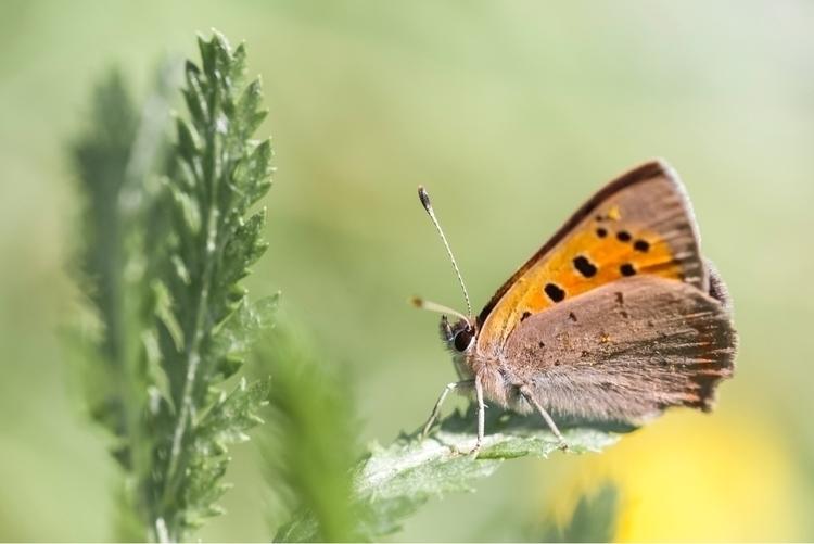 beauty, butterfly, meadow, nature - elloyoubooth | ello