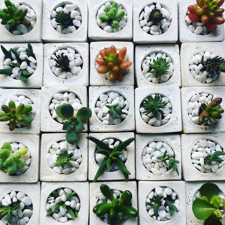 Mini succulent planters - succulents - sweetyellowdecor | ello